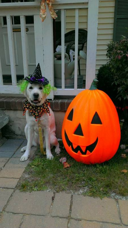 Lucy halloween